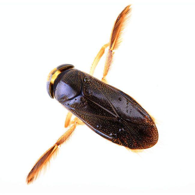 Pool Bug Killer